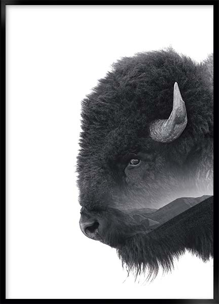 Posters - Bison