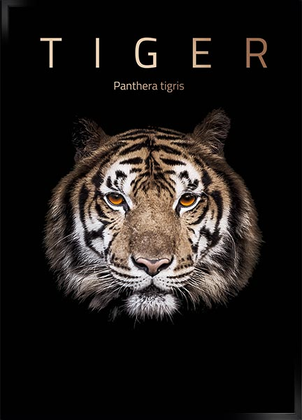 Posters - Tiger