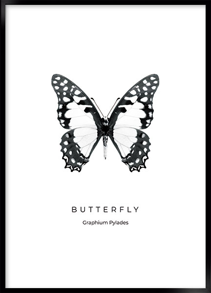 Posters - Butterfly no1