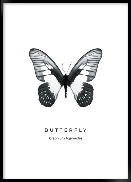 Posters - Butterfly no2