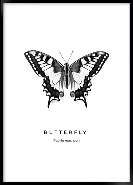 Posters - Butterfly no3