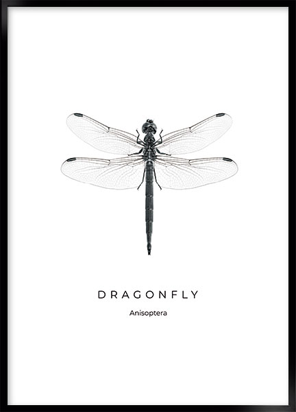 Posters - Dragonfly