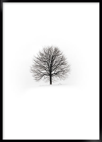 Posters - Lonely tree