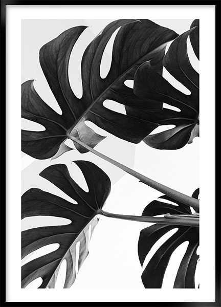 Posters - Monstera