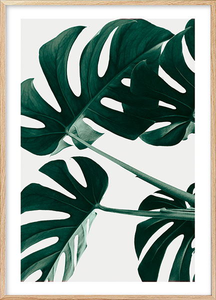 Posters - Monstera no1