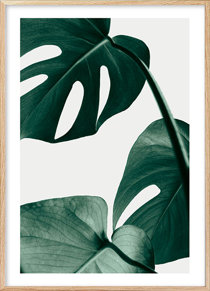 Posters - Monstera no2
