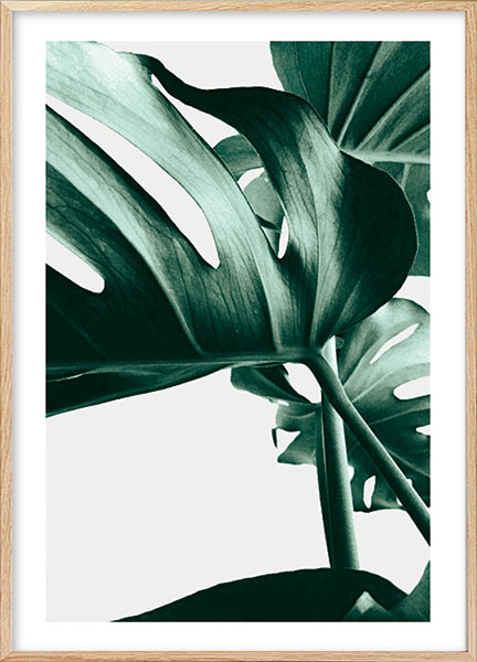 Posters - Monstera no3