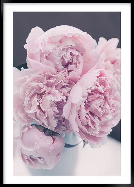 Posters - Peony pink no2