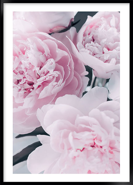 Posters - Peony pink no3