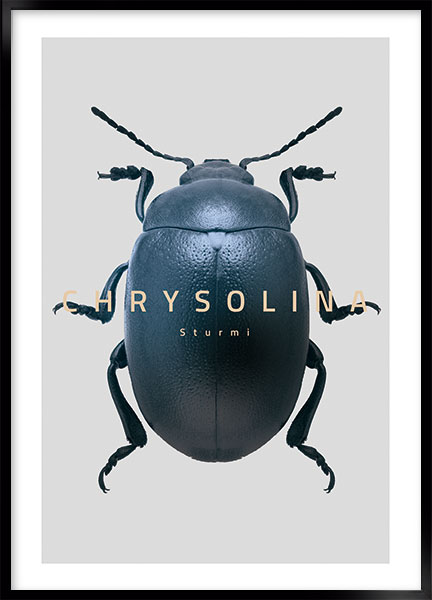 Posters - Bug Chrysolina