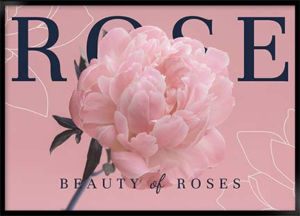 Posters - Beauty of roses