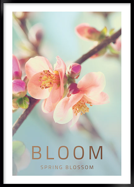 Posters - Bloom