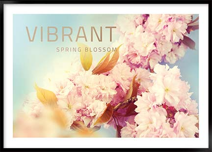 Posters - Vibrant